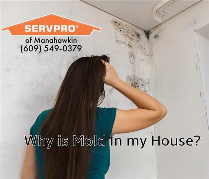 SERVPRO of Manahawkin Technicians are Mold Experts